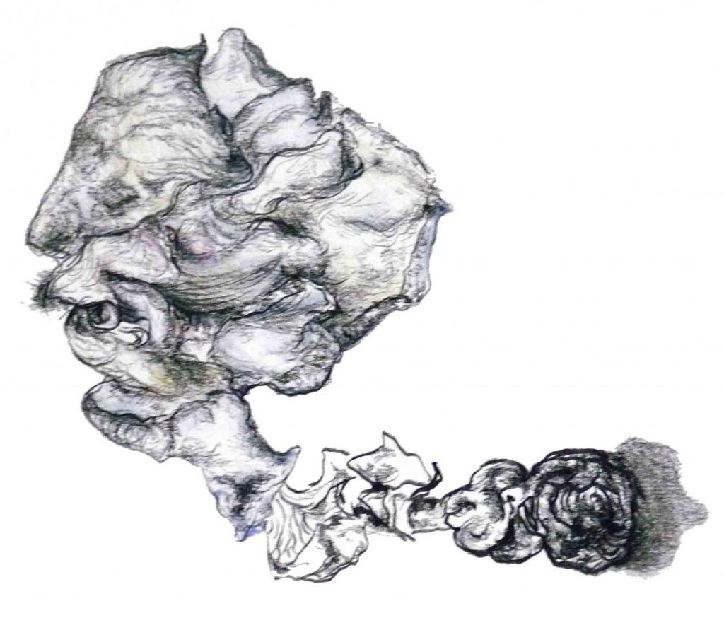 Geerten Ten Bosch, bloemen en zaaddozen,                               , drawing, tekening, art, kunst
